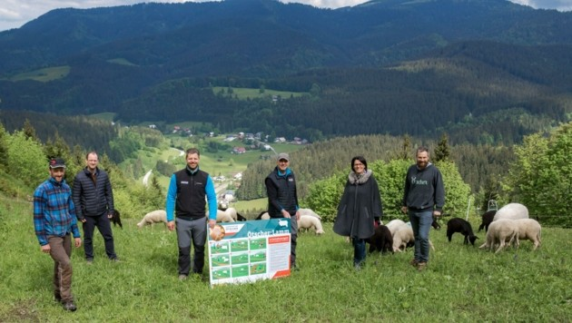Schafweiden in der Bergregion im Mostviertel – Ötscherlifte-Chef Andreas Buder (3. v. li.) mit weiteren Projekt-Initiatoren (Bild: Rene Jagersberger/Mostmedia)
