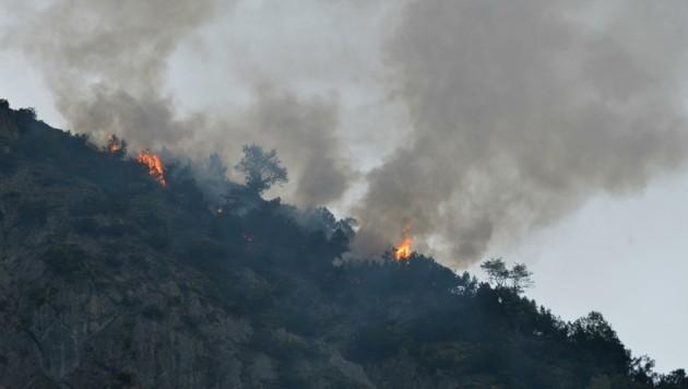 Bäume und Latschen brannten im Außerfern bei Heiterwang. (Bild: ZOOM.TIROL)