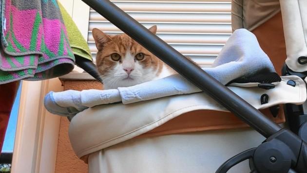 Auch die Haare der Katze zählen zu den Indizien. (Bild: Elisabeth Nachbar)