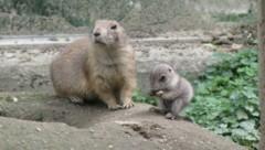 (Bild: Tierpark Walding)