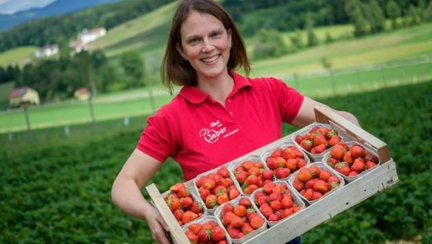 Wir Steirer lieben Erdbeeren! (Bild: Alexander Danner)