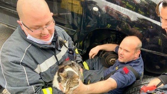 """Aus dem warmen Motorraum des fremden Autos ging es dank des beherzten Einsatzes der Helfer für Katze """"Luna"""" nur leicht verletzt wieder nach Hause. (Bild: FF Groß-Enzersdorf)"""