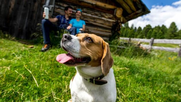Wenn der Hund im Urlaub eine Freud´ hat, haben das Herrli und Frauerl auch. (Bild: c Steiermark Tourismus / ikarus.cc)