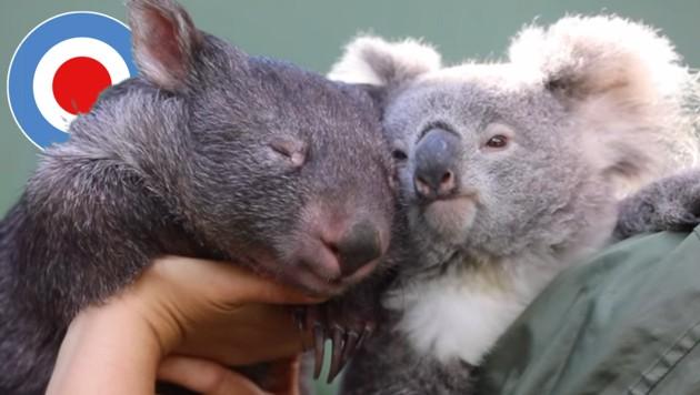 (Bild: facebook.com/theaustralianreptilepark)