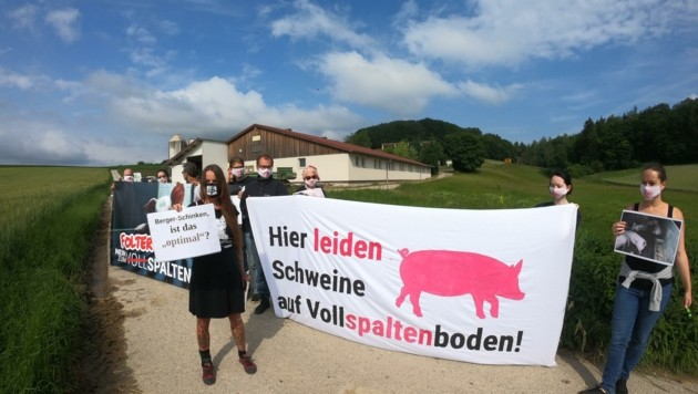 Tierschutz-Aktivisten werfen weiterhin einen genauen Blick auf die Schweinemastbetriebe (Bild: VGT/Verein gegen Tierfabriken)