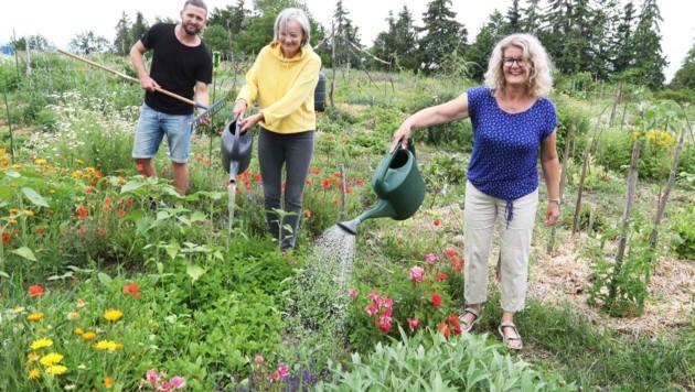 In den Gemeinschaftsgärten werden Blumen, Gemüse und Beeren gleichermaßen angebaut (Bild: Judt Reinhard)