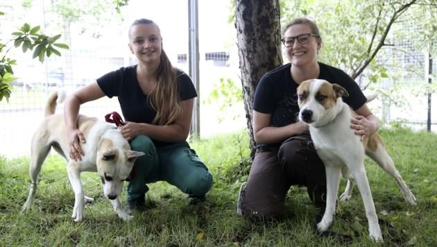 """Im Tierheim Salzburg kümmern sich die Pflegerinnen Sarah und Valerie um ihre Schützlinge. Die Hunde """"Honey"""" und """"John"""" suchen ein passendes Zuhause. (Bild: Tröster Andreas)"""