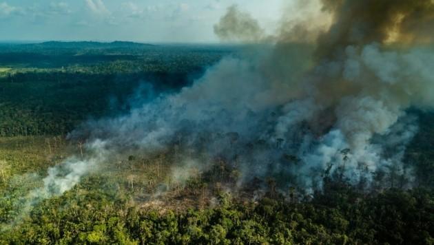 In Brasilien wurden Ländereien im Amazonas-Regenwald auf Facebook verscherbelt. Das soziale Netzwerk will nun verstärkt gegen solche Aktivitäten vorgehen. (Bild: Fábio Nascimento/Greenpeace)