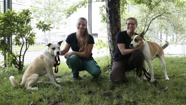 """Die Hunde """"Honey"""" und """"John"""" warten im Tierheim Salzburg auf neue Besitzer. (Bild: Tröster Andreas)"""