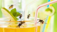 Insekten im Blick behalten! (Bild: Ingo Bartussek/stock.adobe.com)