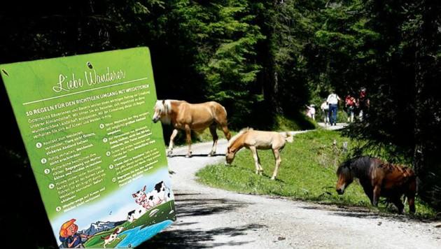 Tiere mitten auf dem Weg: Hier heißt es ruhig bleiben und ausweichen. (Bild: Max Grill, Gerhard Schiel)