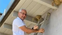 Tierarzt Klaus Fischl brachte die kleine, aus dem Nest gefallene Schwalbe zurück (Bild: Christian Schulter)