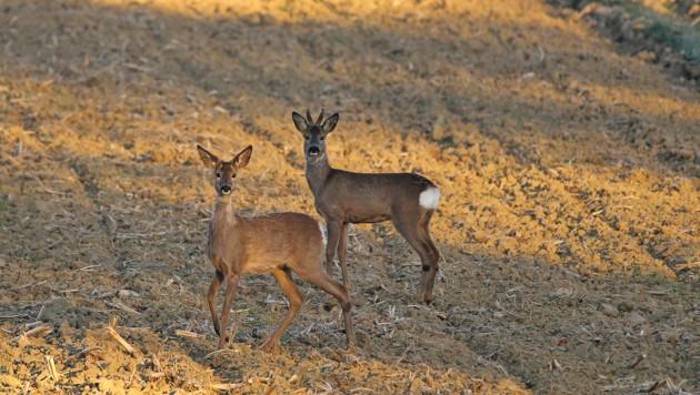 Aufgrund der sauberen, geschützten Natur und des vielfältigen Reliefs bewohnt eine Fläche von ca. 3.000 km2 eine wirklich beeindruckende Anzahl von Tierarten.