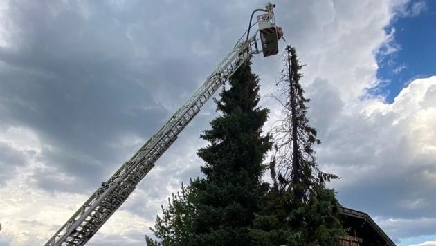 In Villach brannte eine 20 Meter hohe Fichte. Die Hauptfeuerwache, die FF Judendorf und die FF Völkendorf sanden im Einsatz. (Bild: feuerwehr-villach.at)
