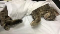 Die junge Katze musste eingeschläfert werden. (Bild: LPD)