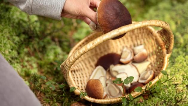 (Bild: ©M.Dörr & M.Frommherz - stock.adobe.com)