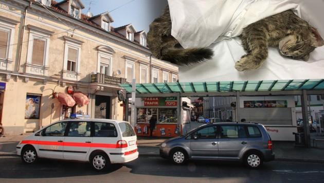 Am Grazer Griesplatz wurde eine der beiden gehäuteten Katzen gefunden.