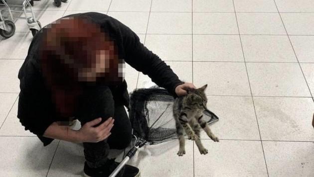 Das verschreckte Kätzchen wurde sanft abtransportiert. (Bild: Feuerwehr Krems)