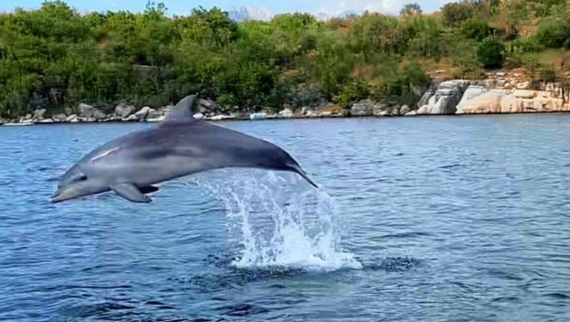 """Der junge Delfin wurde von seinen Fans """"Milli"""" getauft - und sorgt für Entzücken. (Bild: zVg)"""