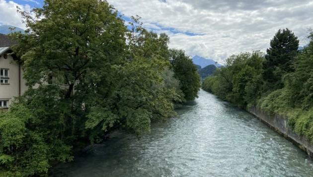 Am Sillufer ist ein Kahlschlag uralter Bäume geplant (Bild: Neuner Philipp)