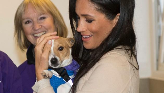 Herzogin Meghan liebt Hunde. Das Foto zeigt sie beim Besuch eines Tierschutzhauses in Großbritannien. (Bild: ROTA / Camera Press / picturedesk.com)