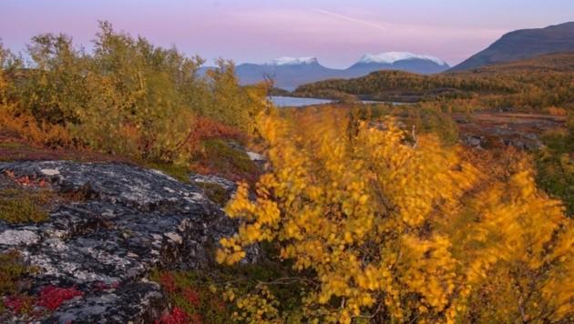 In der Permafrostregion wachsen die Pflanzen immer üppiger.