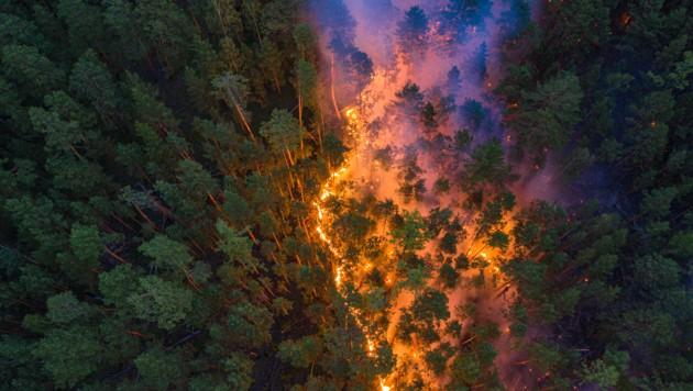 (Bild: Julia Petrenko/Greenpeace)