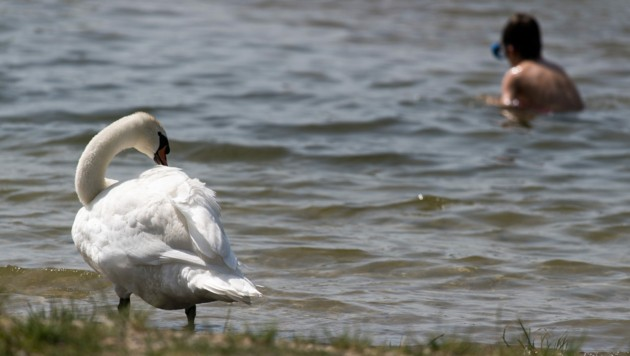 Neue Donau (Bild: APA/EXPA/MICHAEL GRUBER)