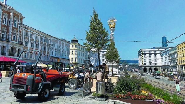 Bäume am Linzer Hauptplatz