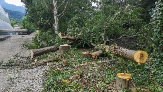 Gefällte Bäume im Mandelsberger Park entsetzen Anrainer (Bild: Erich Spiess)
