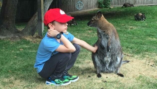 Die Kängurus ließen sich von den Kindern streicheln. (Bild: zVg)