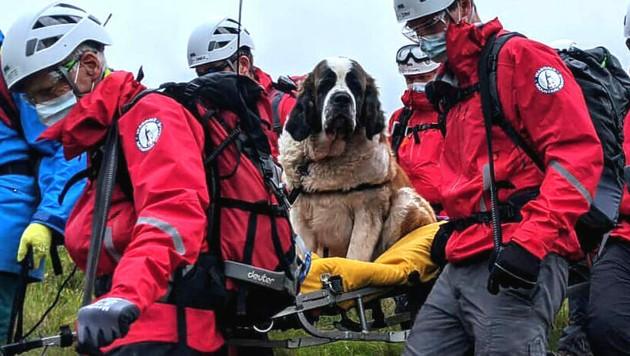 """""""Daisy"""" wurde von der Rettungsmannschaft ins Tal getragen. (Bild: AFP)"""