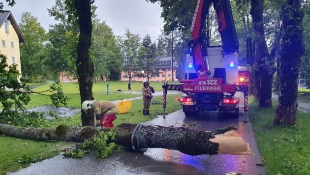 In Saalfelden mussten viele umgestürzte Bäume beseitigt werden. (Bild: Freiwillige Feuerwehr Saalfelden)