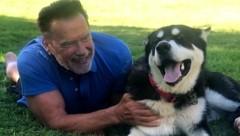 """Arnold Schwarzenegger mit seinem Hund """"Dutch"""" (Bild: twitter.com/Arnold)"""