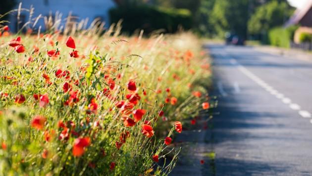 Was wächst da am Wegesrand? Die Natur überwindet sogar Asphaltstraßen.