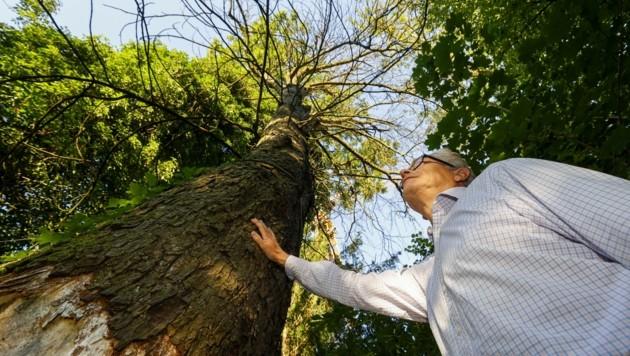 Christoph Ferch vor einem der maroden Bäume. (Bild: Tschepp Markus)