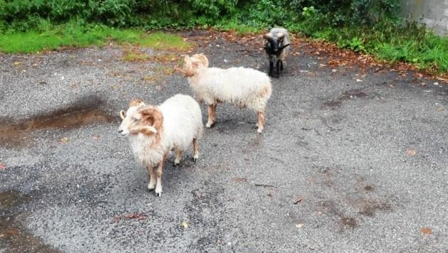 Die tierischen Abenteurer wurden im Schwarzenbergpark in Hernals entdeckt.