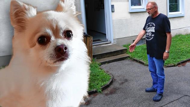 """""""Milo"""" wurde von einem Pitbull getötet. Erika G. und Lebensgefährte Thomas B. (re.) haben Anzeige erstattet. (Bild: zVg, Peter Tomschi, Krone KREATIV)"""