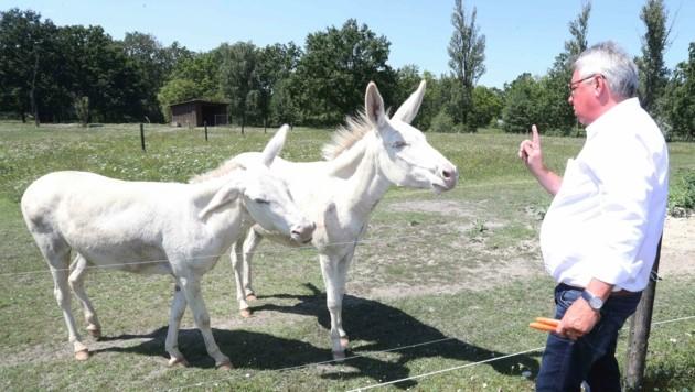 In Jandls Ökopark haben auch weiße Esel Zuflucht gefunden