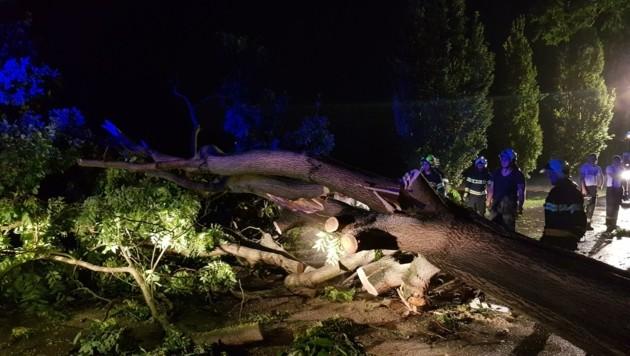 Umgestürzte Bäume blockierten die Straßen (Bild: FF Grafenwörth)