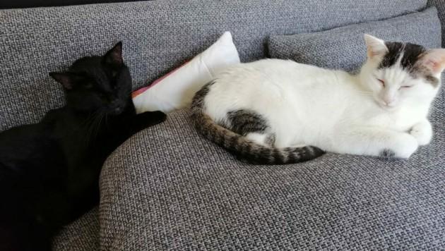 Charly und Maunz (Bild: zVg)