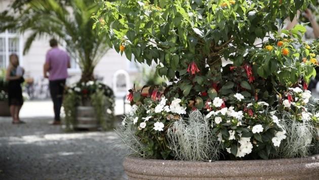 Pflanzentröge und Sitzbänke werten den Innenhof des Schlosses Mirabell schon jetzt auf
