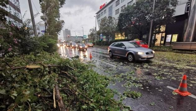 Jede Menge Bäume stürzten um.