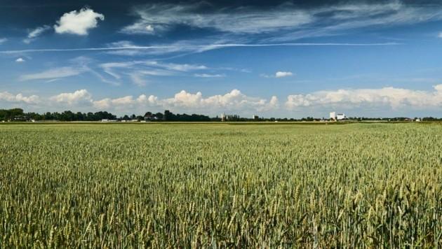 Wertvolles Ackerland und Biotope sollen geopfert werden. (Bild: zVg)