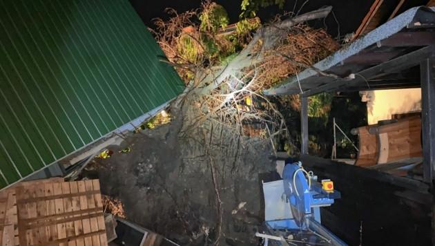 In Graz musste ein Baum geborgen werden (Bild: BF Graz)