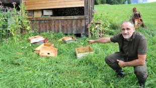 Der Bienenstock von Stefan Simschitz (Almhalter auf der Poludniger Alm) aus Mellweg wurde Opfer des Bären. Am Bild der Jagdobmann der Jagdgemeinschaft Egg, Wolfgang Fercher. (Bild: SOBE HERMANN 9232 ROSEGG)