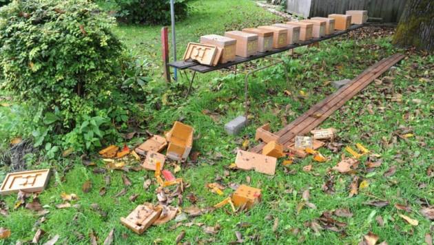 Bienen- und Aufzuchtstöcke sind zerstört. (Bild: SOBE HERMANN 9232 ROSEGG)