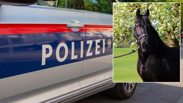 "Die Friesenstute ""Engerl"" (kl. Bild) erlitt lebensbedrohliche Verletzungen."