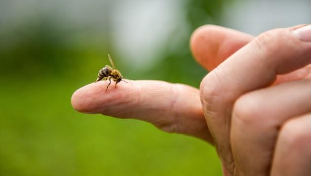 (Bild: ©sergo321 - stock.adobe.com)
