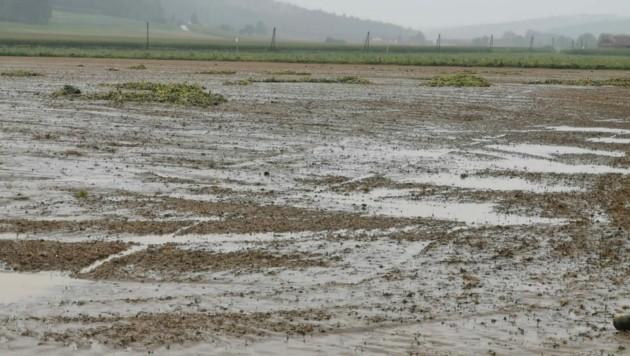 Ein überschwemmter Kürbisacker in Fehring (Bild: ÖHV)